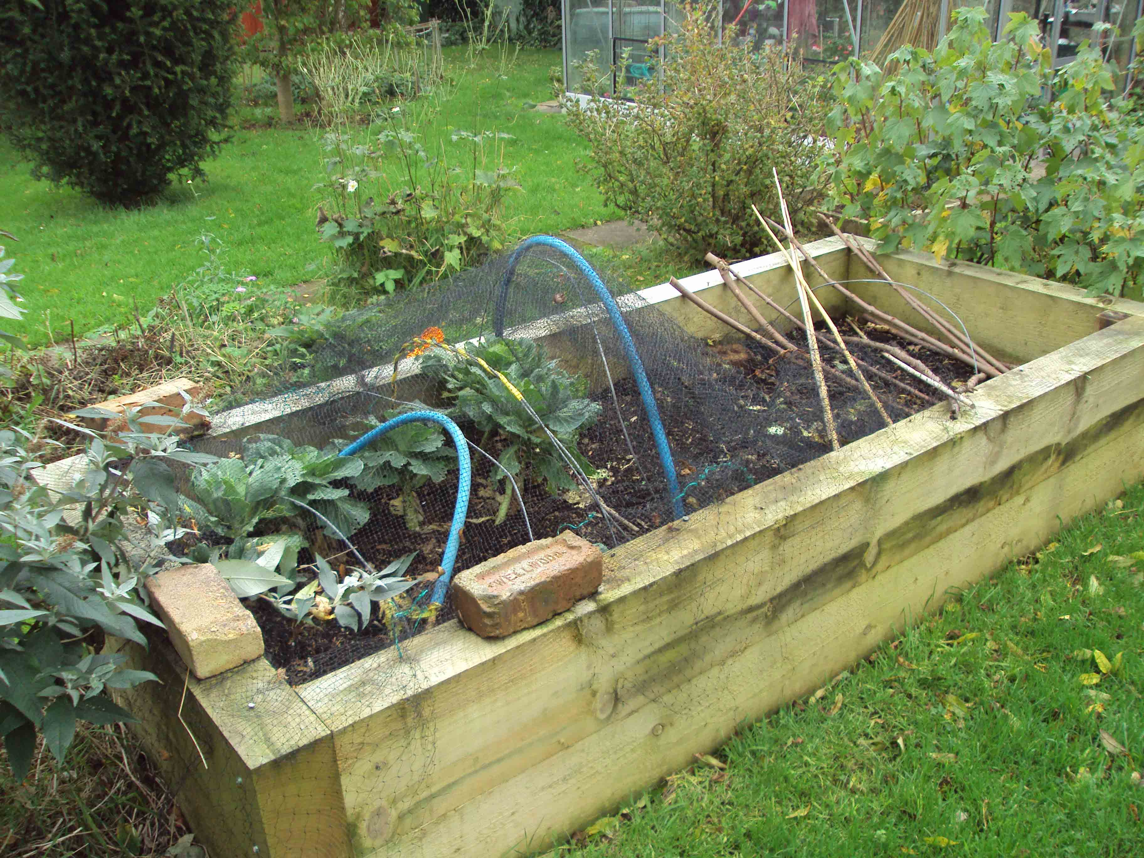 Raised beds3.jpg