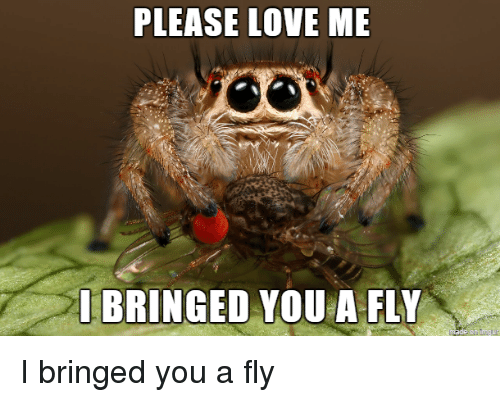 please-love-me-ibringed-vou-a-fly-i-bringed-you-3002315.png